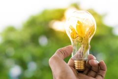Men hold light bulbs with sun in the daytime, with tree bokeh backdrops using wallpaper or background for idea work for business w. Ork Stock Image