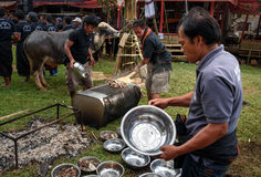 Men impose buffalo meat from cauldron at the funeral ceremony in Tana Toraja Stock Images