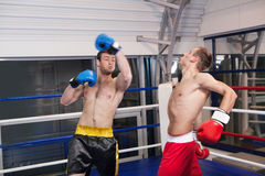 Men kickboxing. Two confident men kickboxing on the ring Stock Photography