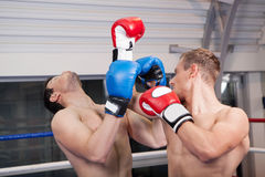 Men kickboxing. Royalty Free Stock Image
