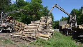 Men load log transport Stock Photos