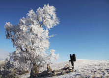 Men looking a frozen tree Stock Photography
