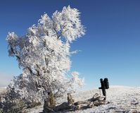 Men looking a frozen tree Royalty Free Stock Images