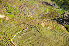 Rice terraces in Longsheng Royalty Free Stock Photo
