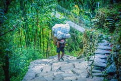 Men in Nepal is carrying a big heavy load on his back Stock Image
