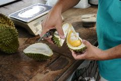 Men open Durian Fruit Stock Images