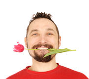 Men with the pink tulip Stock Image