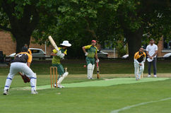 Men play Cricket in Victoria park Auckland, New Zealand Royalty Free Stock Images