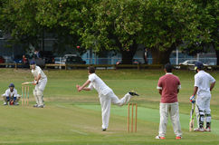Men play Cricket in Victoria park Auckland, New Zealand Royalty Free Stock Photo