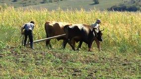 Men plow the land plow stock footage