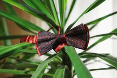 Men& rojo x27; lazo de mariposa de la boda de s Foto de archivo