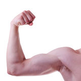 Men's biceps. Men's biceps on a white background Stock Photography