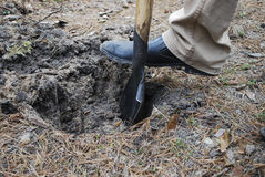 Men's foot on a shovel, dig a hole. Stock Photos