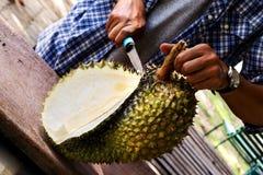 Men`s hands cutting Durian fruit. Men`s hands cutting Durian fresh fruit Royalty Free Stock Photos
