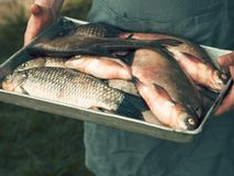 Men`s hands hold a tray with freshly fish Royalty Free Stock Photography