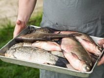 Men`s hands hold a tray with freshly fish Stock Image