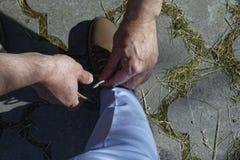 Men's Hands tying a string on shoes. Men's Hands tie a string on women's shoes Stock Image