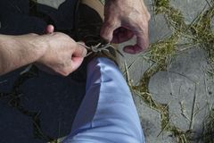 Men's Hands tying a string on shoes. Men's Hands tie a string on women's shoes Royalty Free Stock Photo