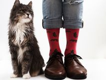 Men`s legs in funny socks and beautiful kitten Stock Photography