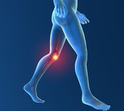 Men's skeleton, knee inflammation. Men's skeleton, race knee inflammation pain Stock Photo