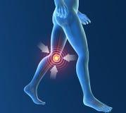 Men's skeleton, knee inflammation. Men's skeleton, race knee inflammation pain Royalty Free Stock Images