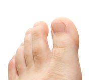 Men's toes. On a white background Stock Image