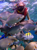 Men snorkeling Stock Photography