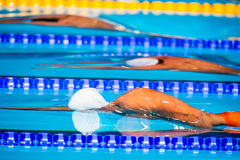 Men start swimming race. Start swimming race in swimming pool Stock Photo