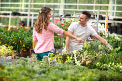 Men surrounded by plant in greenhouse Royalty Free Stock Photography