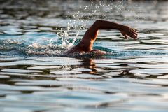 Men swimming in the sea. royalty free stock images