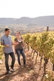 A man talking to a woman in the vineyards Royalty Free Stock Photos