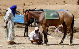 An man tie his horse to park  in the souk of the city of Rissani in Morocco Stock Photos