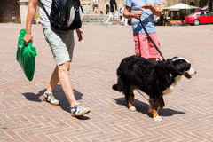 Men walking with a bernese mountain dog. Two men walking with a bernese mountain dog in a town Stock Photos