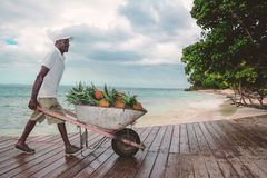 Men whit the pineapple in the wheelbarrow Royalty Free Stock Image