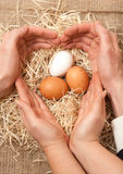 Men and women hands forming shape of heart on nest with eggs Royalty Free Stock Images