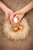 Men and women hands putting white egg in the nest with brown eggs Stock Photos