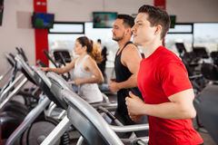 Men and women jogging on a treadmill Stock Photography