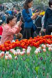 People watching tulips in Hangzhou. Men and women watching the tulips blossom in a park in Hangzhou, China stock photography