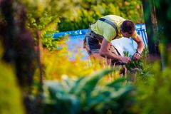 Men Working in His Garden Royalty Free Stock Photography