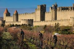 Men working in vinyards. Carcassonne. France Royalty Free Stock Image