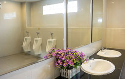 Men's room throwing flowers and artificial bay. Royalty Free Stock Photo