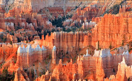 Menagramo impressionante in Bryce Canyon Immagine Stock