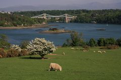 Menai Bridge. In spring with hawthorn blossoming Stock Photo