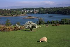 Menai Bridge. In spring with hawthorn blossoming Royalty Free Stock Photo