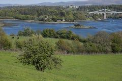Menai zawieszenia most, łąki i drzewa, zdjęcie stock