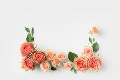 Menchia kwiatów rama Obrazy Royalty Free