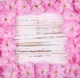 Menchia kwiatów rama Obraz Royalty Free