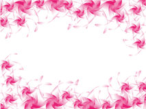 menchia kwiaty. Zdjęcia Stock