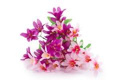 Menchia kwiaty Obrazy Royalty Free