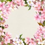 Menchia kwiaty - jabłko, czereśniowy okwitnięcie Kwiecista rama dla kartka z pozdrowieniami watercolour royalty ilustracja